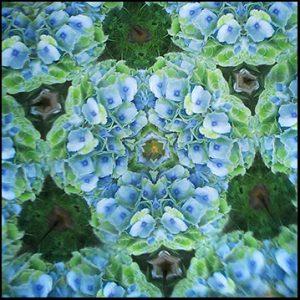 Sulfure hortensia bleu