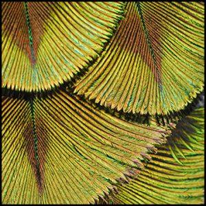Naturalia Plumes