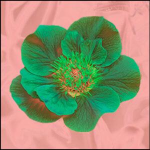 Fleurs éléctriques
